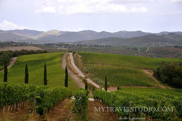 Dievole vineyard