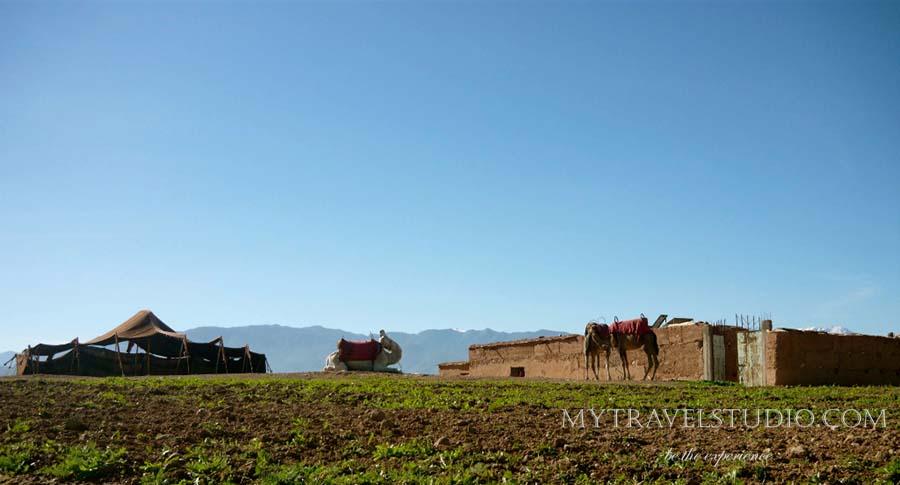 marocco camel