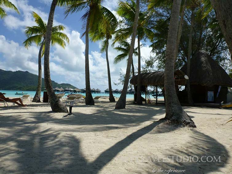 Bora Bora Palm Trees