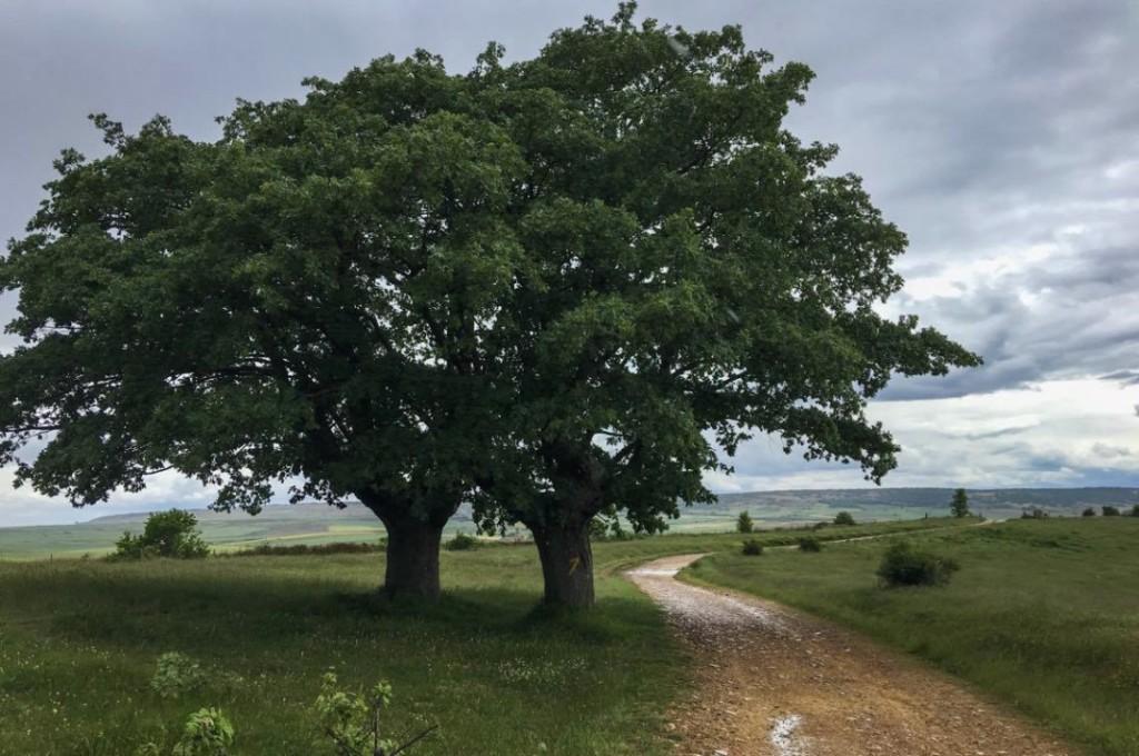 Camino pilgrimage 3