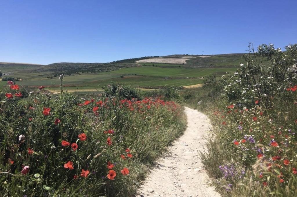 Camino pilgrimage 5